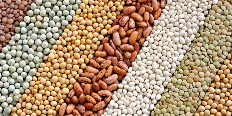 Legumes such as beans, soy or lentils are good sources of iron. (Image: www.col