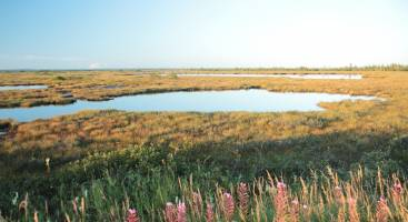 Peat bogs' astonishing ability to resist climate change gives scientists r
