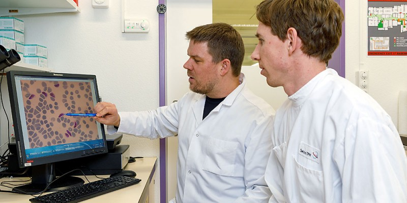 Till Voss (left) and  Michael Filarsky examine gametocytes of the malaria p