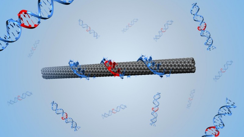 Illustration of a DNA-wrapped single-walled carbon nanotube (credit: Benjamin La