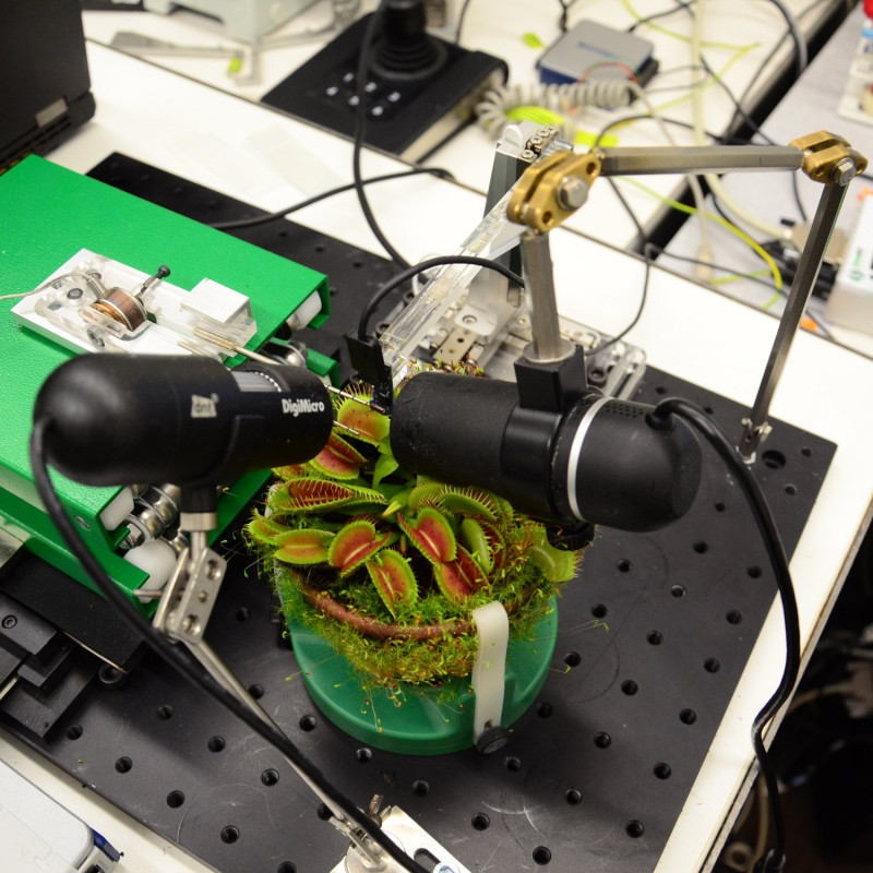 Experimental set-up with Venus flytrap, two cameras, microrobotic system, and lo