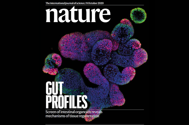 FMI mouse intestinal organoids made it to the Nature cover!