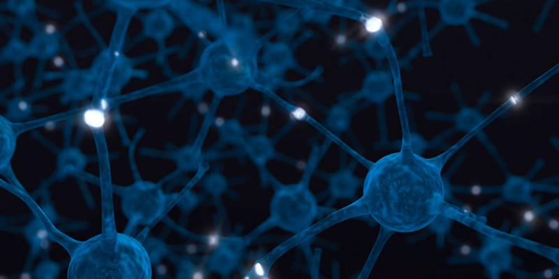 At the cell and molecule level, many memory functions are nearly identical from