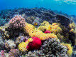 Major discovery helps explain coral bleaching