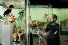 Visit natural science collections to get on the trail of a Swiss natural scienti