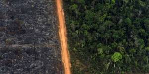 Deforestation in the South American rainforest extends along roads - as here in