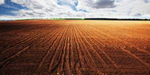 Researchers expect a global decrease in the concentration of selenium in arable