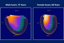 The heart ages differently in men an women. While chamber volumes increase with
